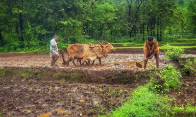 The Plunge Daily - Post-Harvest Agri Startup
