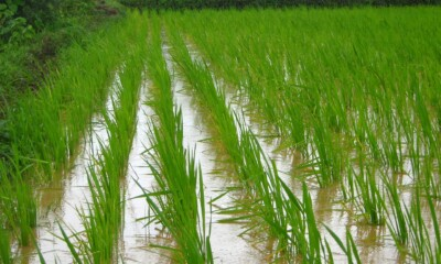 Post-harvest Agri startup Arya launches A2ZGoddam a comprehensive digital platform
