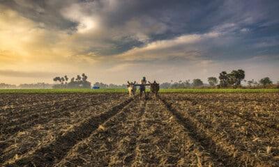 Centre directs fertiliser firms not to hike price of non-urea fertilisers