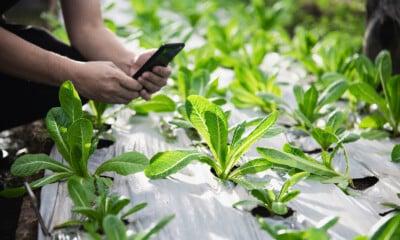 Odisha's agri push to boost entrepreneurship_mybigplunge