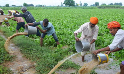 Indian Agriculture assures FAO of consistency in export of farm products for steady global supply