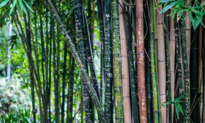 Government keen to develop and boost bamboo-based industry