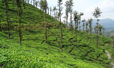 The central government has reached out to the Assam tea workers, in time for the assembly polls in the state, distributing Rs 3,000 each to 7.47 workers.