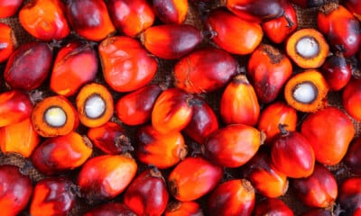 Golden Agri-Resources Leverages R&D to Draw on Palm Oil's Health Benefits