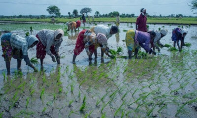 Women farmers key for making Indian agriculture self-reliant: Govt