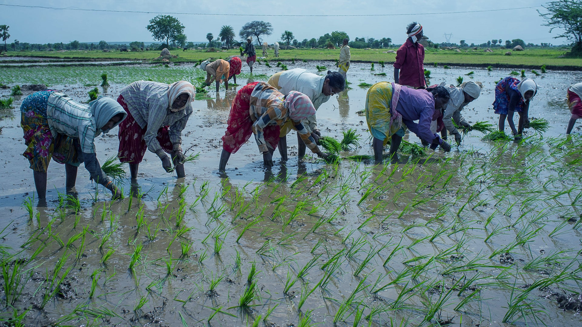 ICAR issues advisory to overcome impact of 2nd COVID wave on farm sector