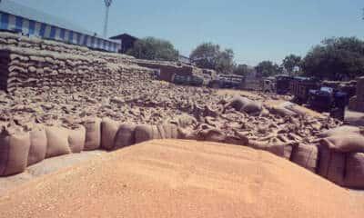 wheat and paddy procurement