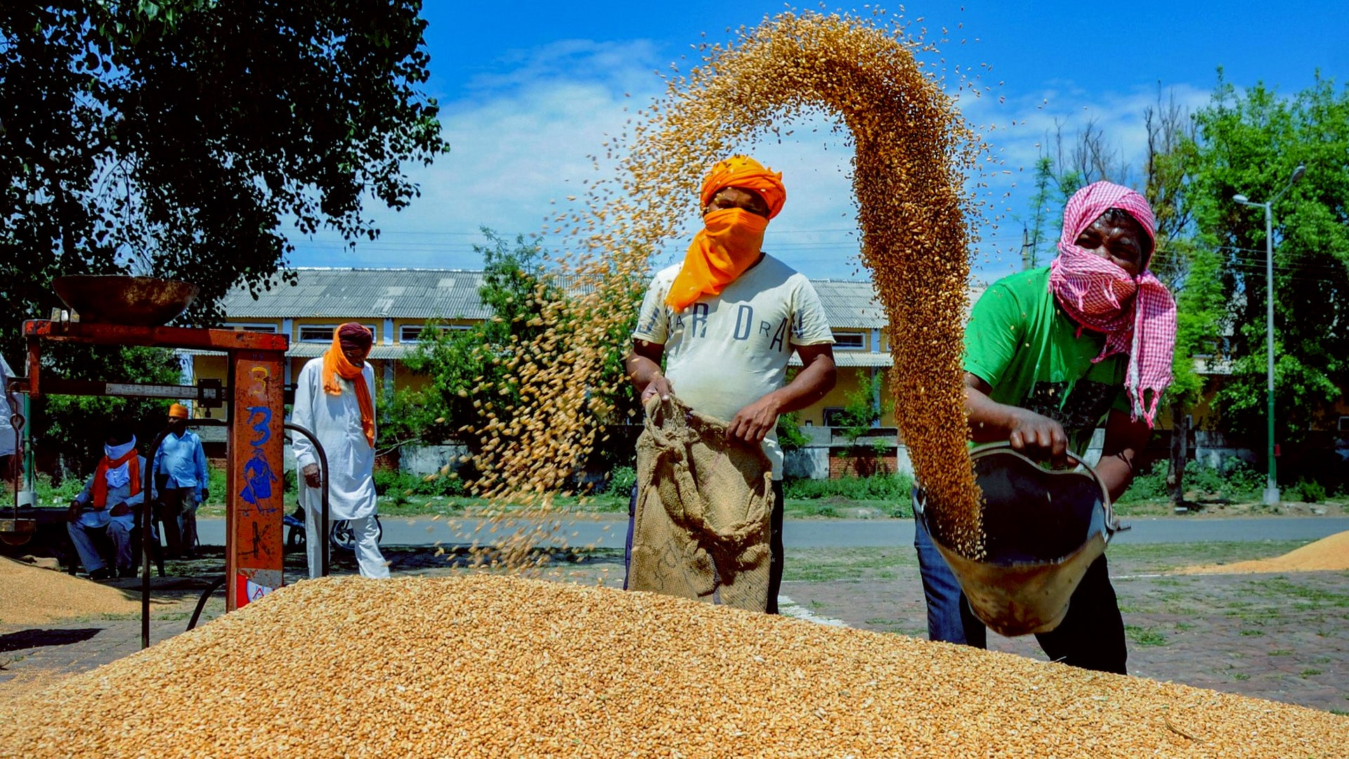 FCI, startups join hands to develop simple, handy grain-testing equipment