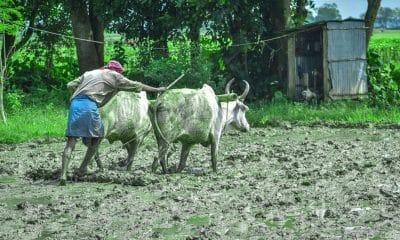 Jharkhand govt waives Rs 980 cr loan of 2.46L farmers