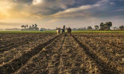 ICAR, DIC ink pact to provide farm tele-advisories across India