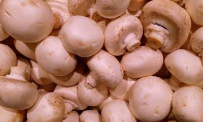 Arya set to train farmers in mushroom cultivation across India