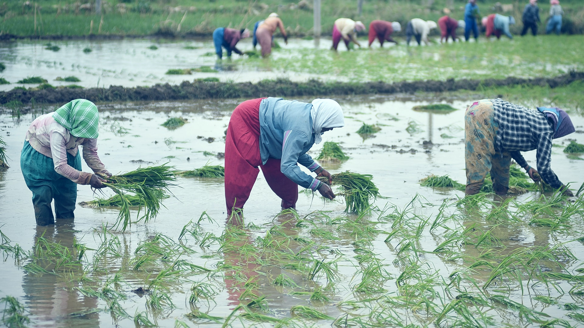 Agri sector exempted from obtaining NOC for ground water extraction: Tomar
