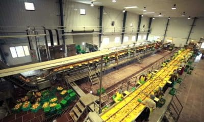 FDI in food processing sector falls 57 pc to Rs 2926 crore in FY21