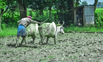 Govt aims to create national farmers database using digital land records: Tomar
