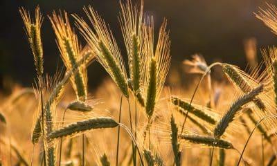 BRICS for partnership in strengthening agro-biodiversity to ensure food security