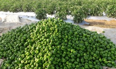 KissanPro signs pact with Barakat Vegetable & Fruit to help farmers sell produces in Middle East