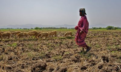 'Over 50pc agricultural families in debt with avg loan of Rs 74,121 in 2019'