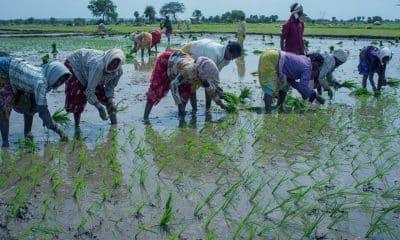 Govt to focus on digitisation of 98,000 agri cooperatives for digital lending