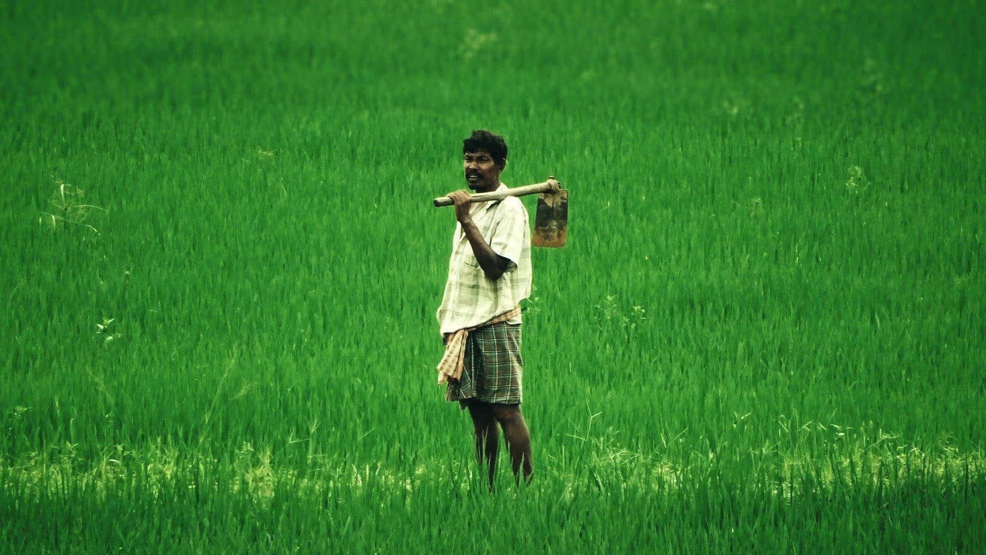 Centre to cross check farmers land records before paddy procurement