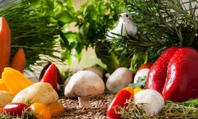 Ongoing COVID-19 pandemic prompts households to take up home food gardening