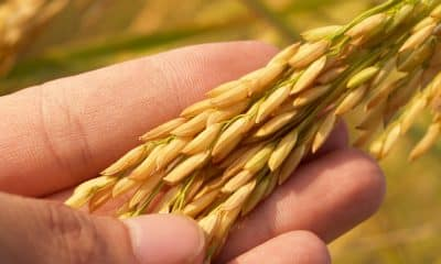 Farmer leaders allege private players procuring paddy instead of government buying on MSP